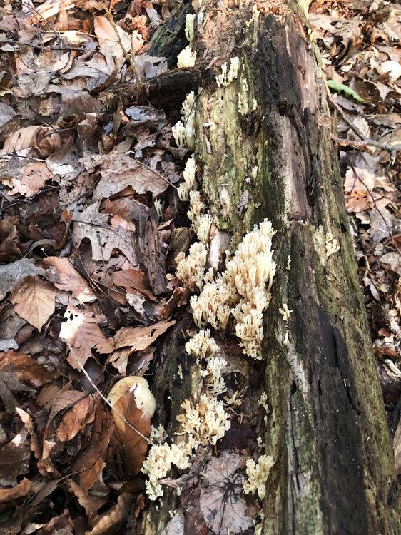 Coral-Mushroom-Newark.jpg